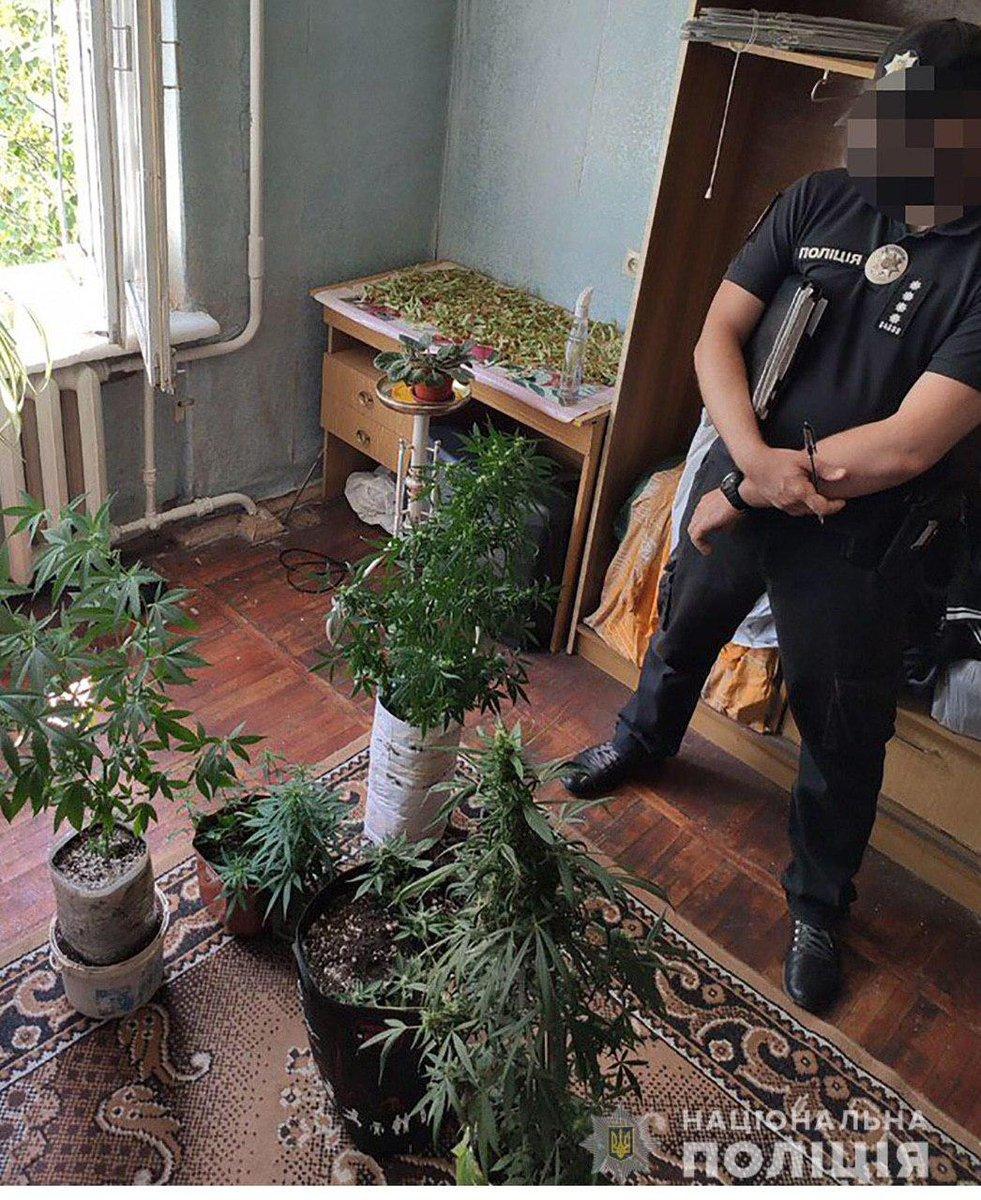 Оперативники марихуана конопля узловая