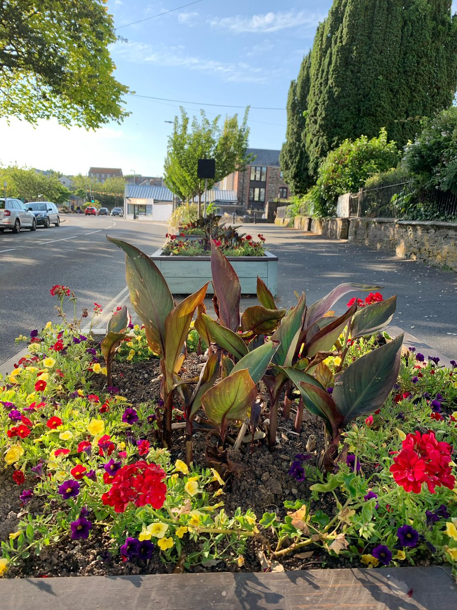 Our cannas are doing well again this year #bloomhour