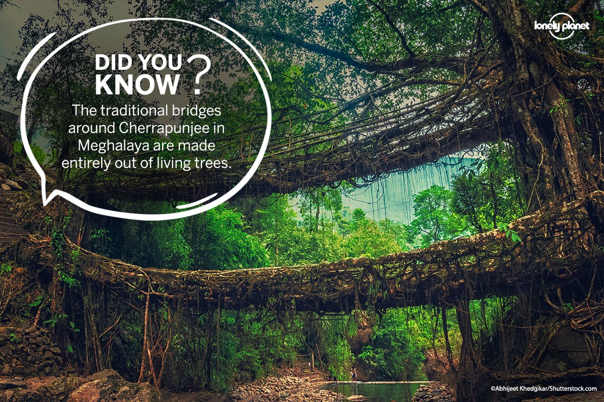 The traditional bridges in #Meghalaya are made entirely out of living trees. They are handmade from the aerial roots of rubber fig trees by the Khasi and Jaintia masses. Share this #WednesdayWisdom fact with your friends/family and make them aware of this marvel of nature. #lpin https://t.co/KsWvyPNHkM