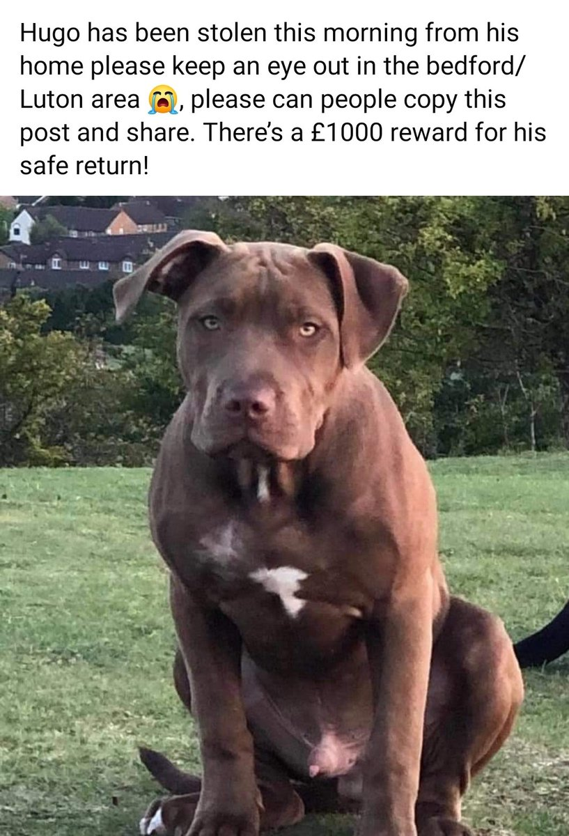 Missing Pets Gb On Twitter This Is Beyond Despicable Poor Hugo Pet Theft And Abuse Is So Out Of Control Pet Thief Dumps Stolen Dog Before Slashing Him With A Knife And