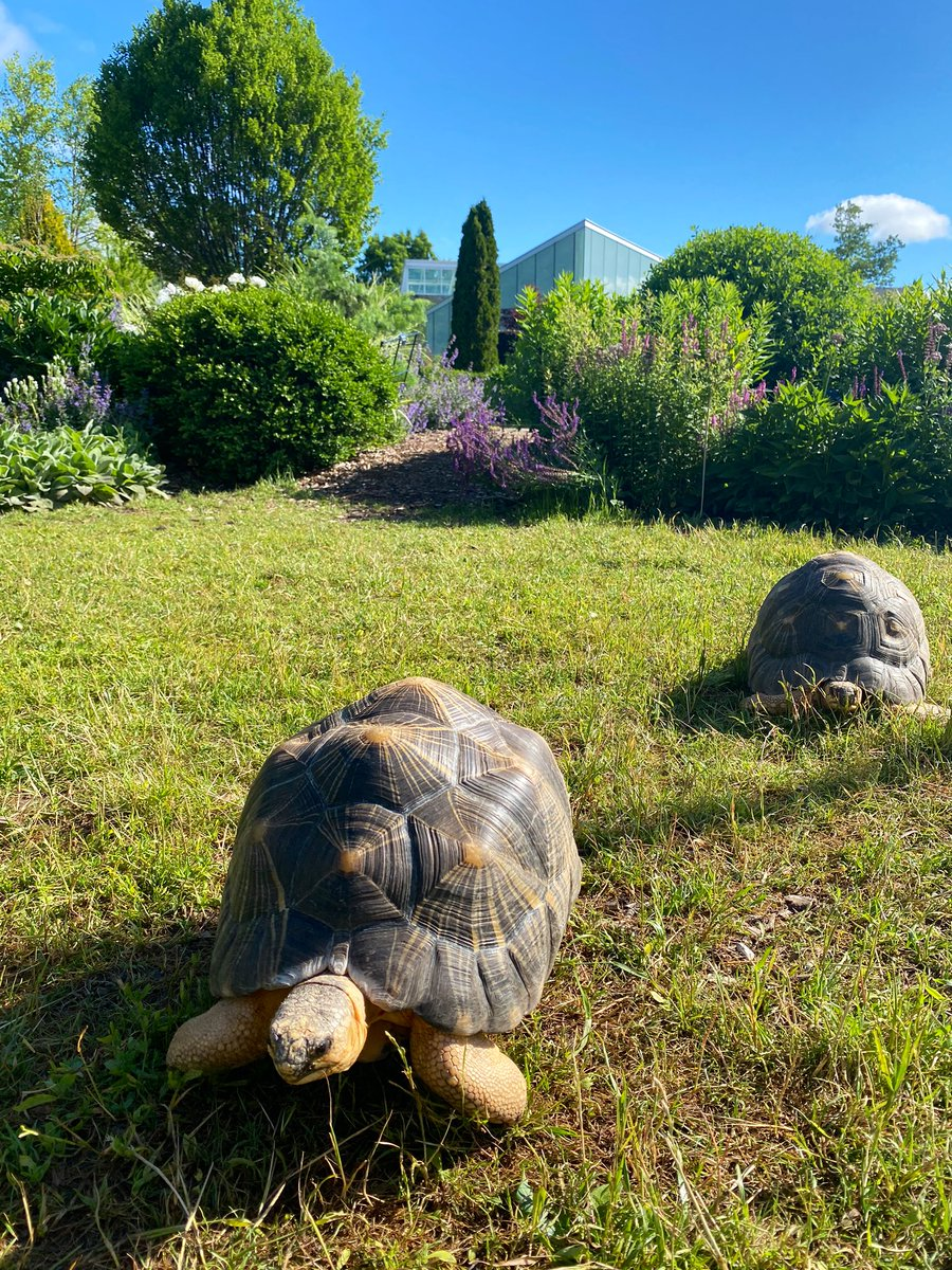 First stop: @TBG_Canada! 🌱🌸 Just in time for breakfast, this place seems to have the type of food we like. Did you know 80-90% of our diet is grasses, fruit and succulent plants? - Hank, Violet and Duke 🐢#TOTortoiseTour