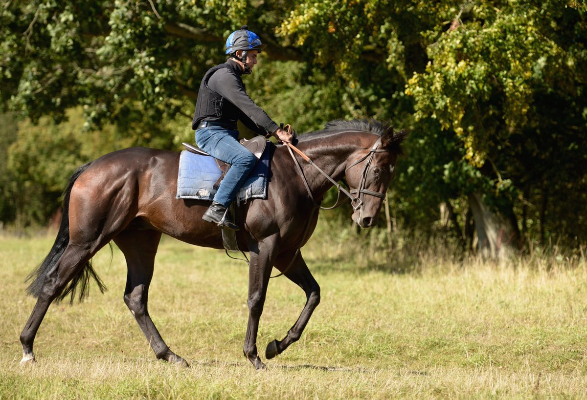 The First King (War Command ex Rochitta), a winner first time out this year in March, runs at Hadock Park this afternoon in the Every Race Live On RacingTV Handicap (3.40 pm) over one mile. He is well and jockey Ben Curtis rides.