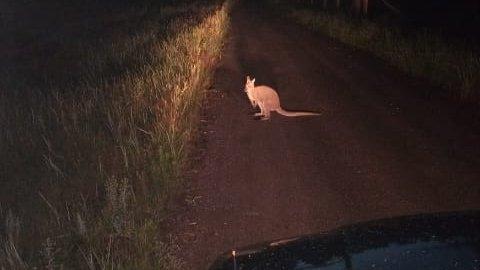 Włocławek niczym Australia!!! Kangur w podmiejskim lesie - Polskie Radio PiK https://t.co/6tAzEyrBp9 https://t.co/Y79rLsP0rb