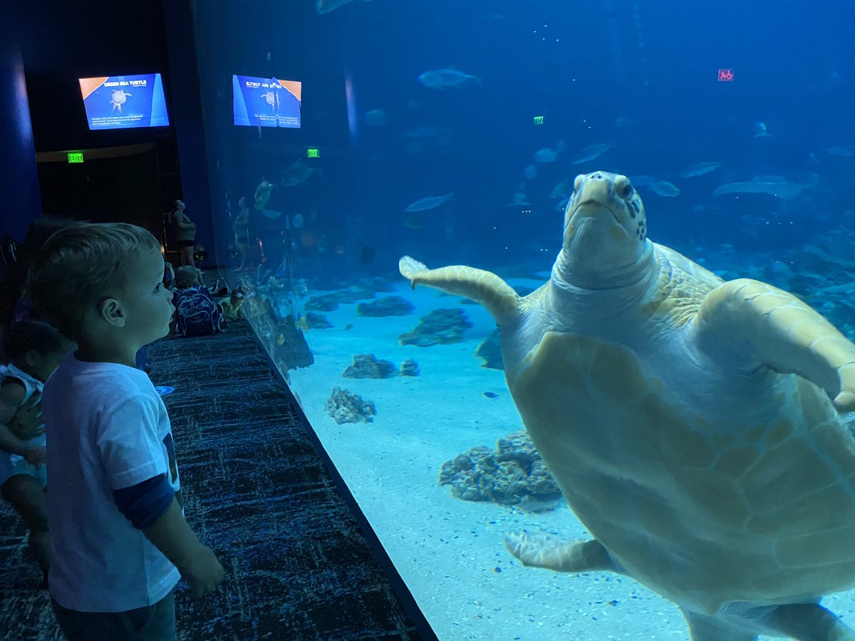 My grandson likes sea turtles too. At the @GeorgiaAquarium today.
