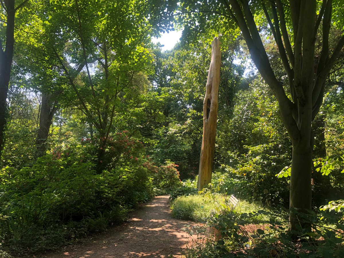 On hot days like today, the perfect place to explore is Oakwood. It's the oldest part of the garden and features many horticultural delights along the winding paths. Book your garden entry time slot here: rhs.org.uk/gardens/wisley…