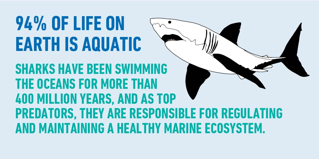As apex predators, sharks keep our oceans healthy by maintaining the species below them in the food chain. #WorldOceanMonth https://t.co/nZDYZ3pJ3o