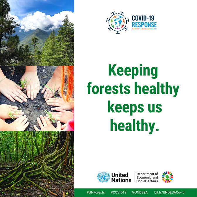 #COVID19 could push 34.3 million more people into extreme poverty in 2020. Many of them depend on forests for food 🍐, fuel🔥 & shelter💒. This is why it is critical that we protect the world's forests. Learn more from @UNDESA's latest policy brief: bit.ly/UNDESACovid