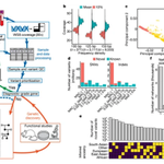 Image for the Tweet beginning: Online @nature: Whole-genome sequencing of