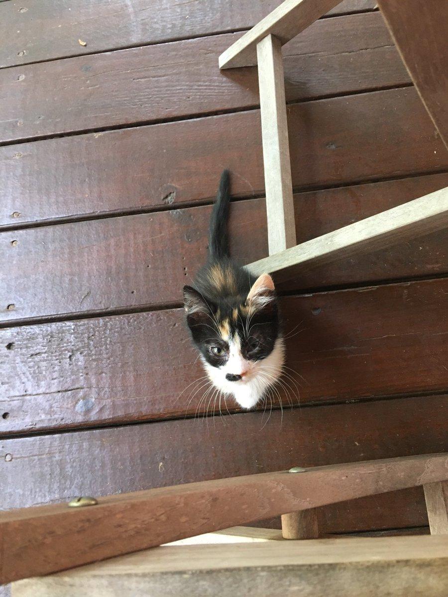 I R tiny cat-tatoe #Mushi-stache https://t.co/2WEEtUWh57