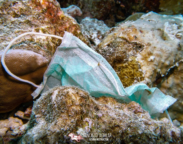 Show us in the comments #COVID19Litter in your area - Use the #DiveAgainstDebris App to report what you've found underwater and #debrisfree sites!  Your data monitors #COVID19 impact on our oceans.   #COVID19Waste #EveryDiveaSurveyDive #AdoptaDiveSite #DiveLocal #CitizenScience https://t.co/EFBbPBW3Uc