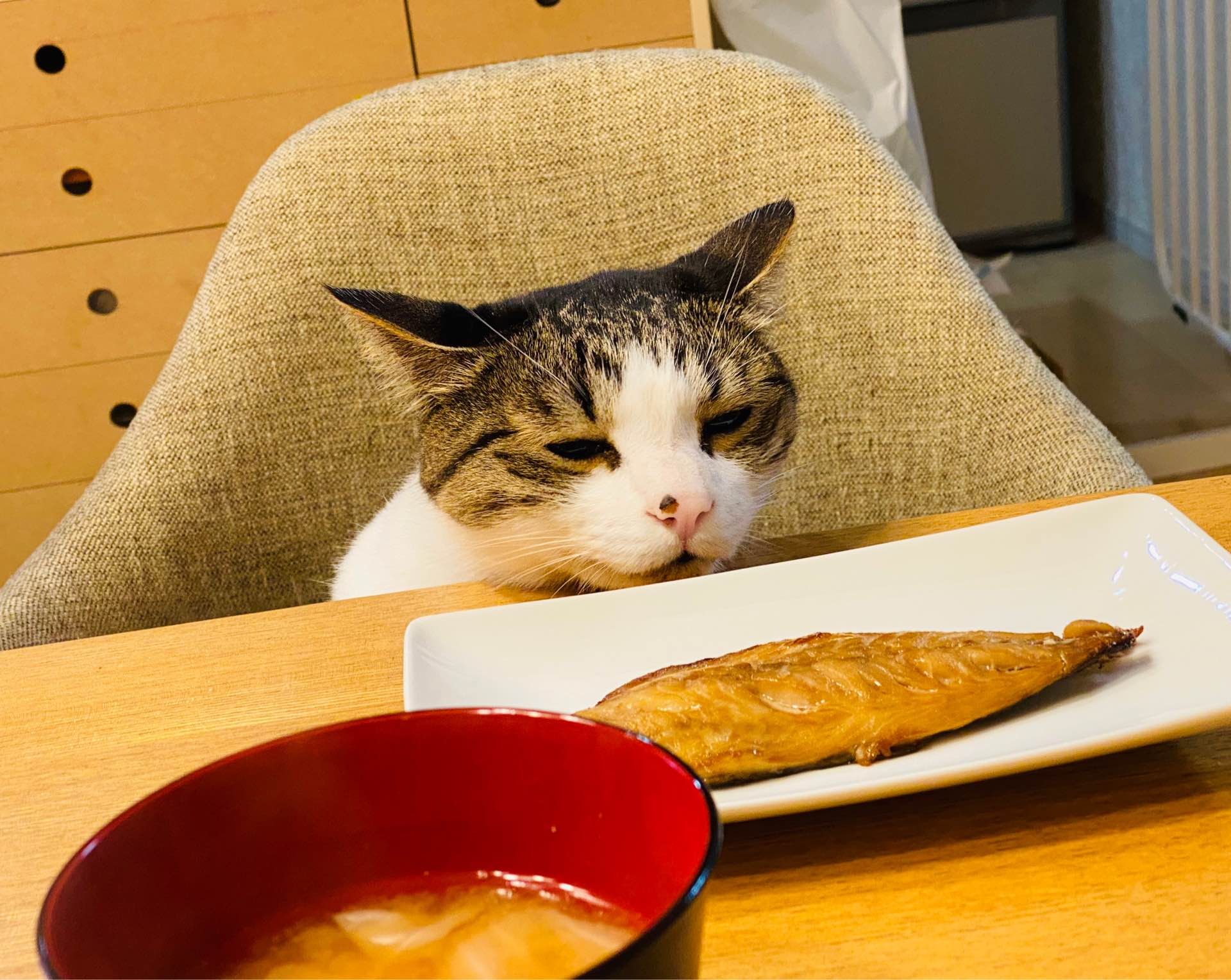 それぞれの思いが交差!?魚を狙う猫とシャッターチャンスを狙うガッチさんww