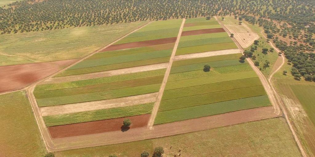 """""""#Ecopionet: innovación y #bioeconomía en el medio rural"""" es el proyecto coordinado desde el #IRNASA que ha llegado a la final de los #RIAwards2020  ¡Te necesitamos! Tienes hasta hoy a las 16:00 para votar por nuestro proyecto:  ➡️https://t.co/2VDdgenUqC https://t.co/z0A44aNoDO"""