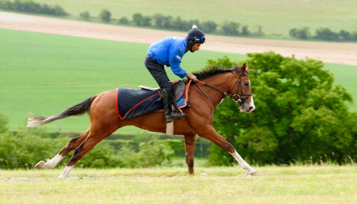 Gordonstoun (Gleneagles ex Elusive Girl) goes to Bath this afternoon for the Sky Sports Racing Sky 415 Maiden Auction Stakes (5.40 pm). He is fit and well for this race over 5 1/2 furlongs and has jockey David Egan in the saddle.