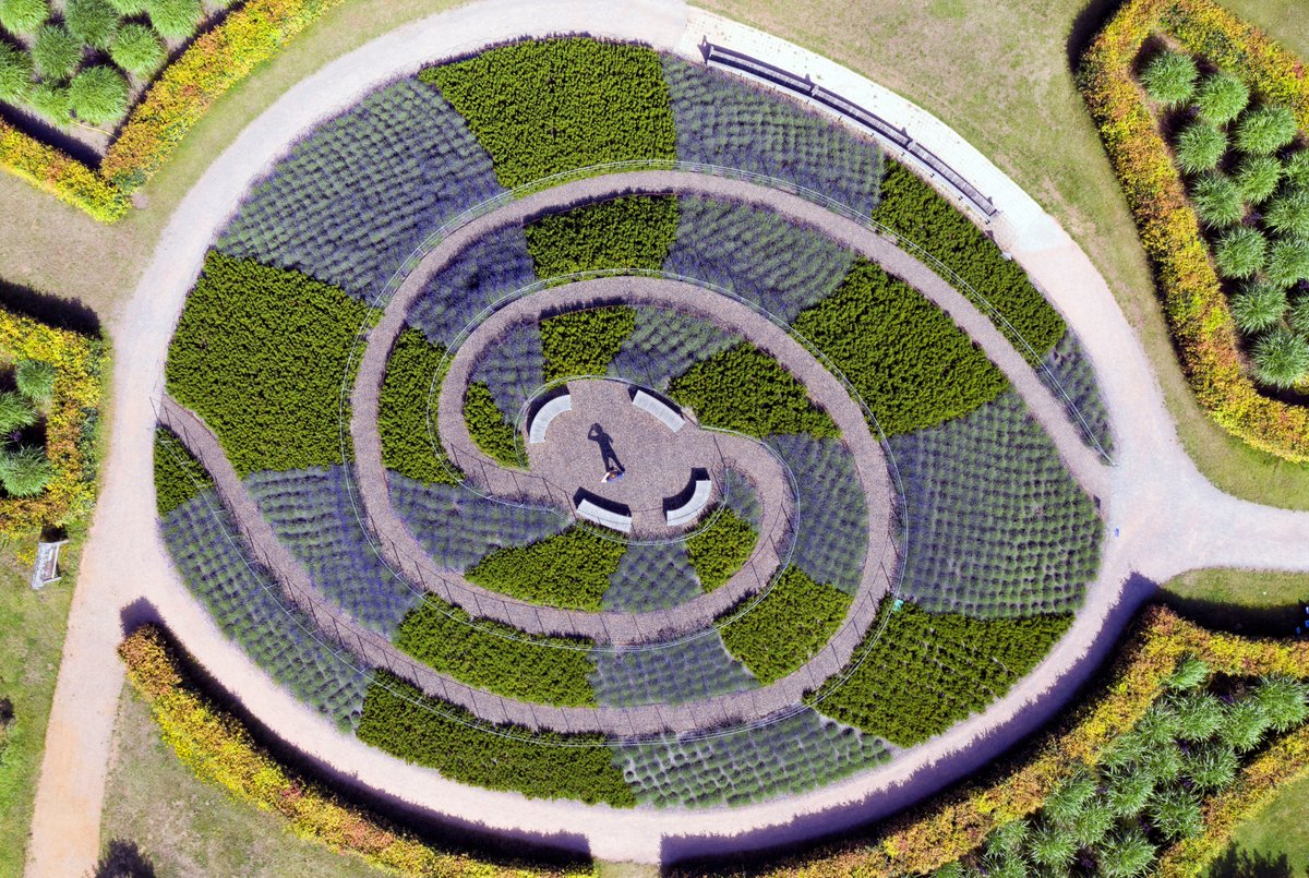 The Viewing Mount is a spectacular site at this time of year, especially from up above. Here you can perfectly see the alternating stripes, created by planting ribbons of lavender and rosemary. It's also very fragrant! rhs.org.uk/gardens/wisley… Image credit @bigladderdrone