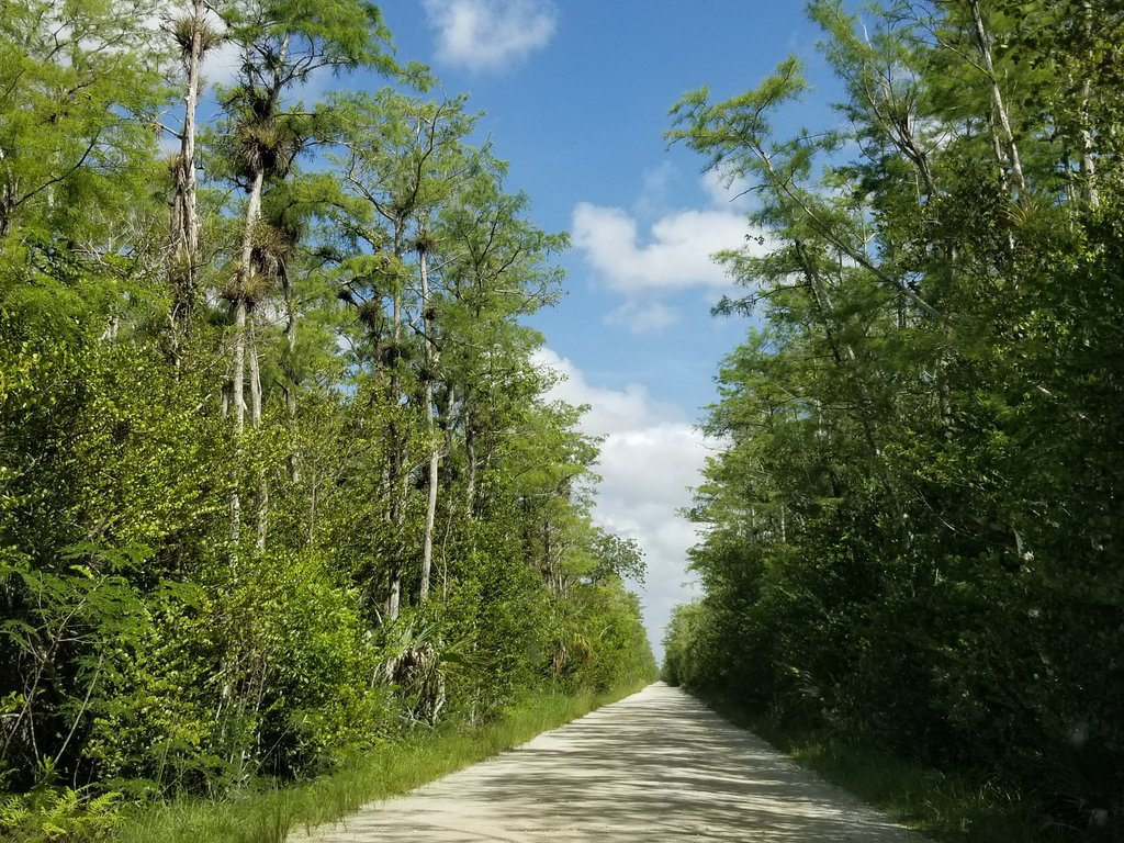 Social distancing on the Loop Road in mainland Monroe County, Everglades National Park