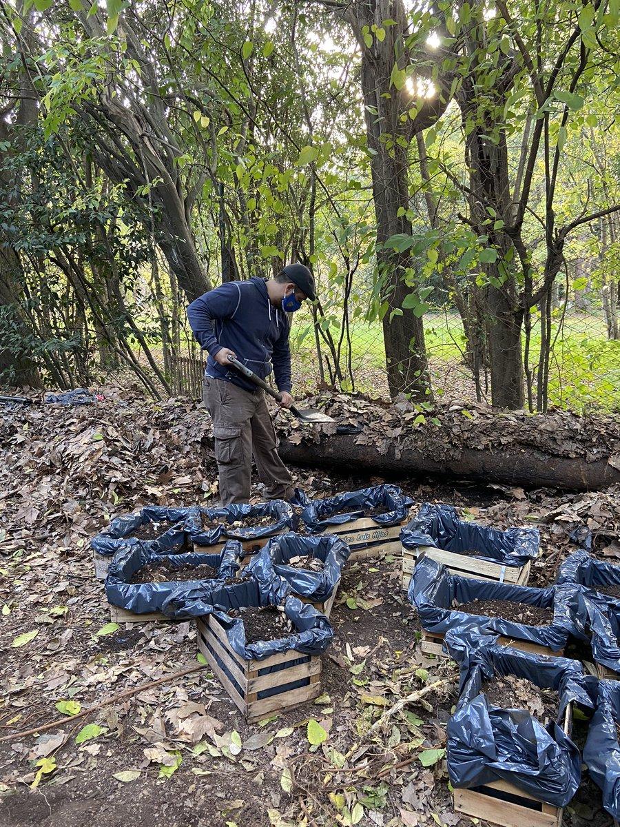 ¡El equipo sigue manos a la obra! 50 huertas + listas para entregar ✅.      🥕🥬🥦🌽 https://t.co/krQHUAAIyA