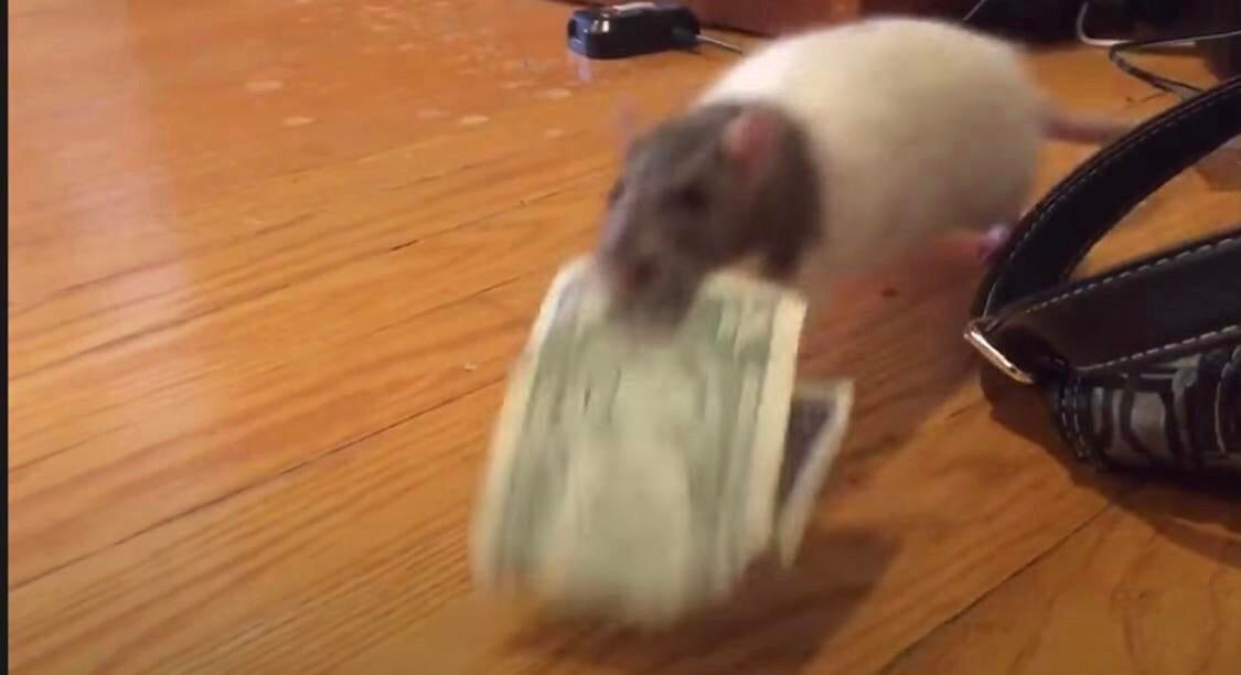e transfers are so lame. rat transfers are the future https://t.co/NFV4Gksie1
