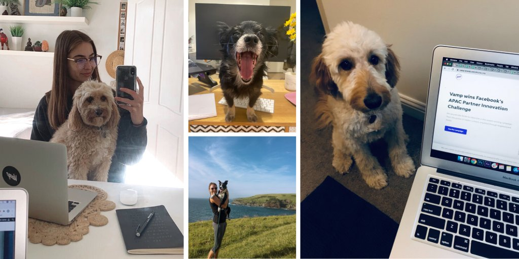 Did you know that today is officially #TakeYourDogToWorkDay?  A silver lining of WFH is that EVERY day is 'Take Your Dog To Work Day', but we couldn't resist giving some of our favourite four legged friends a shout out! 💜  The most supportive members of the extended Vamp fam. https://t.co/wHNH8dhrES