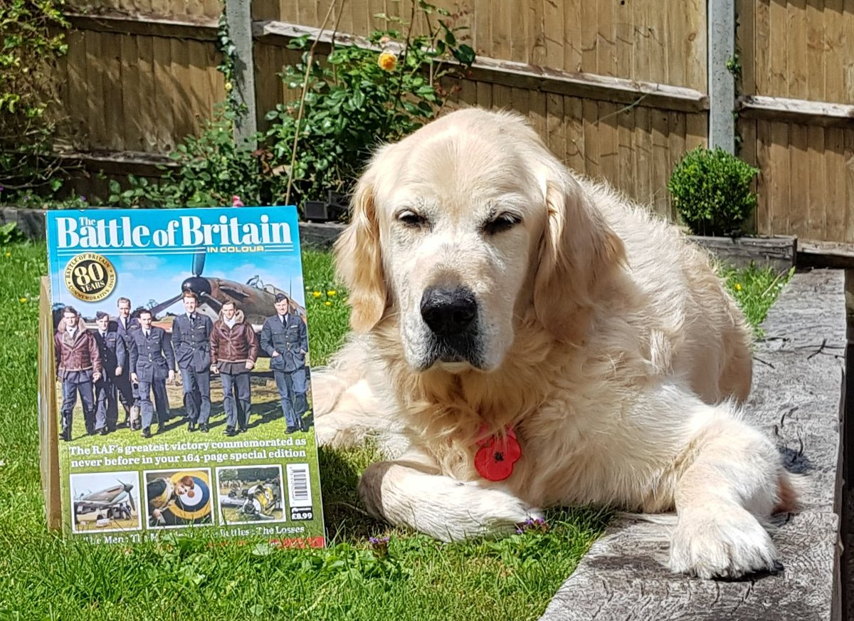 "Thanks @1940Andy for my copy of ""Battle of Britain in Colour""; it's fantastic & Ted is loving it! Next weekend we would all have been @Memorial_theFew to celebrate the courage of ""The Few"" & the 80th Anniversary. Look out for the online Memorial Day next Sunday! https://t.co/Gy7A27E0DY"