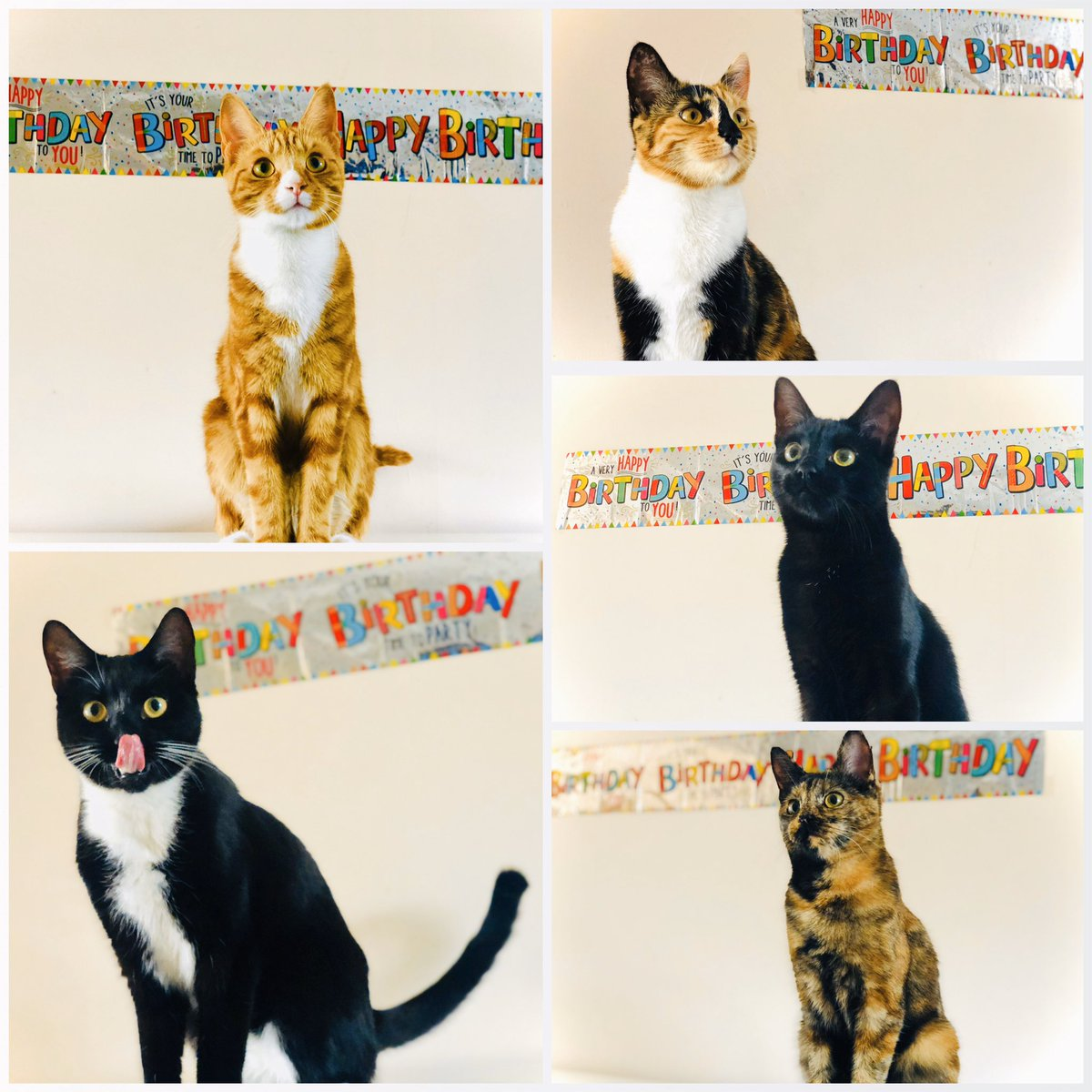 Da cutest birthday collage evuuur! 😍 We had a lil photo shoot on our 1st birthday yesterday and humum made us all a special cake each! 🎂🥳🎉🎈 . . . #CatsOfTwitter #CatsOfInstagram #Kitten #CuteCats #CuteAnimals #TeamFloof #LoveYourPets #FriYay @RSPCA_official @CatsProtection