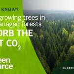 Image for the Tweet beginning: 📢 #Forest for carbon neutrality