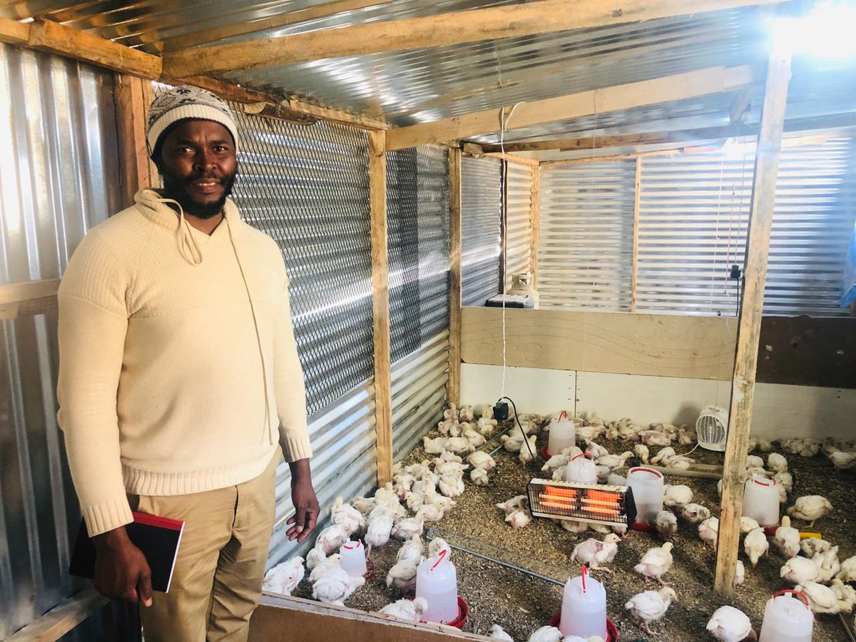 One of our Epol Experts, Martin Mhlongo, recently paid a visit to Sifiso Mabizela in Midrand. Sifiso is a loyal watcher and has learned a lot from the broiler series, and we can see that in his broiler operation! We love seeing how our Epol Experts students learn and grow. #Epol https://t.co/EHcXtIOHQZ