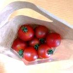 お弁当の彩りミニトマト!そのままお弁当に入れると食中毒を引き起こす恐れが・・・?!