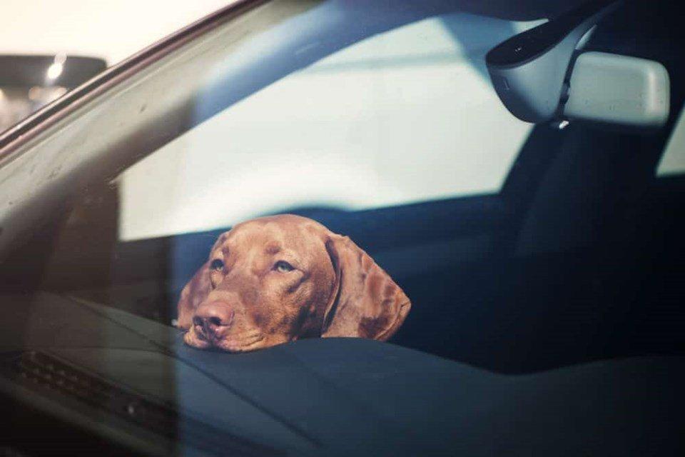 OPP asking public not to leave pets in hot vehicles https://t.co/6vUlFfJPyU https://t.co/u1GIRXRswl