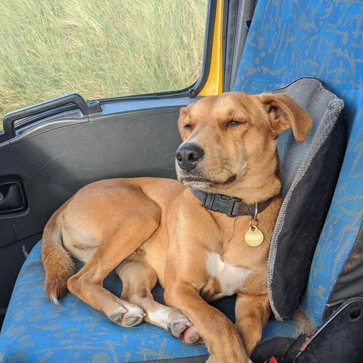 #Unscripted today! One year ago Wesley got sick of the cost of life in Dublin, packed up his van and hit the road with his dog Scooby!  He'll explain the pros & cons of #vanlife to @ciarakellydoc  Would you consider it? https://t.co/xb1jKM84Bs