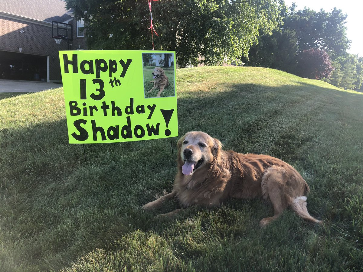 Yesterday was a BIG day for me!!! I got yummy plates at each meal, saw my favorite former neighbors, had a trip to the dog park, ate ice cream, and loved lots of cuddles. I hung on to make it to my teens! #fighter #teenager #happybirthday #Shadtastic #dreamday https://t.co/mffkgpRG3Y