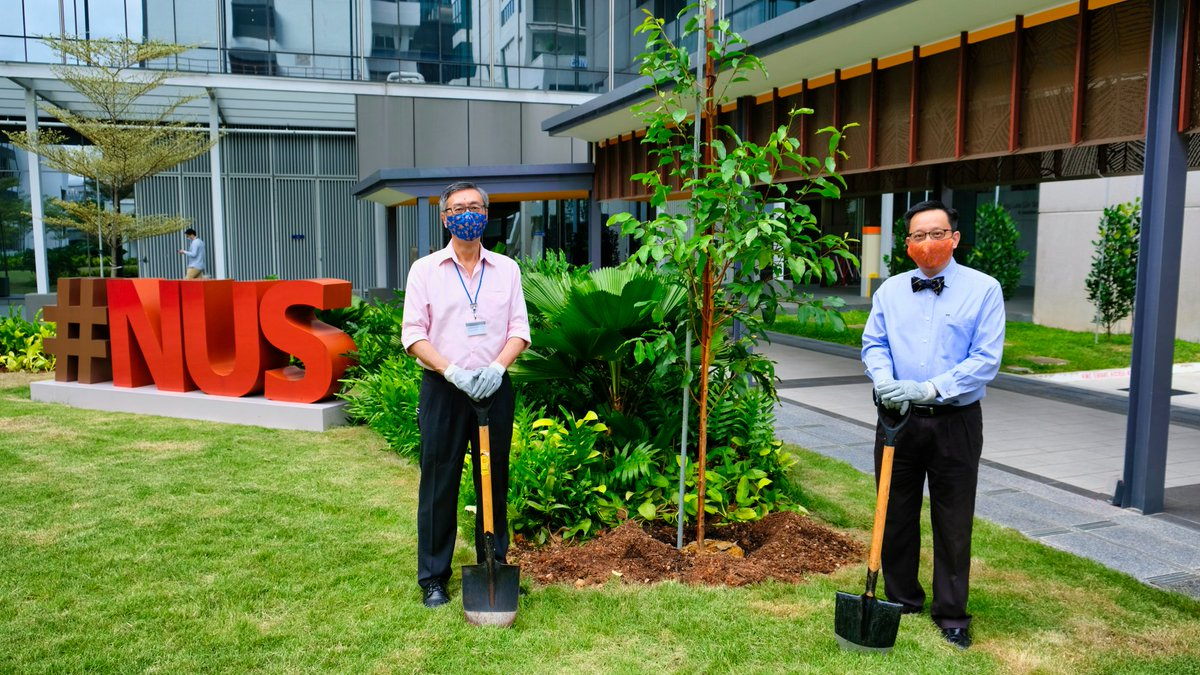 """Today marks 115 years of #NUSMedicine! In celebration, the School's CSR Committee launched the """"Plant-A-Tree"""" programme to plant 115 trees around the NUS campus to raise funds for NUS Medicine Next Generation Fund and the ALCNS Student Bursary READ: https://nusmedicine.nus.edu.sg/medias/news-info/2329-commemorating-nus-medicine-s-115th-anniversary…pic.twitter.com/haRrwZNpm0"""