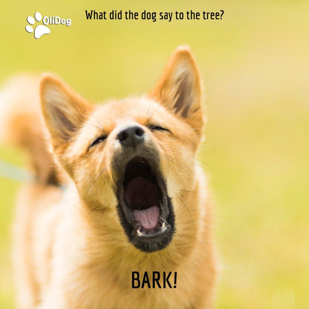 #TGIF! What did the dog say to the tree?  #BARK!  #dogjokes #funnyjokes #instajokes #memesdailybestmemes #funnyisfunny #laughingmemes #funnymemes#funnyjoke #jokes#comedymemes #jokesfordays #jokeoftheday #funnypicture #coolmemes #funnyvids #jokesofthedaypic.twitter.com/KmTSrigmp3