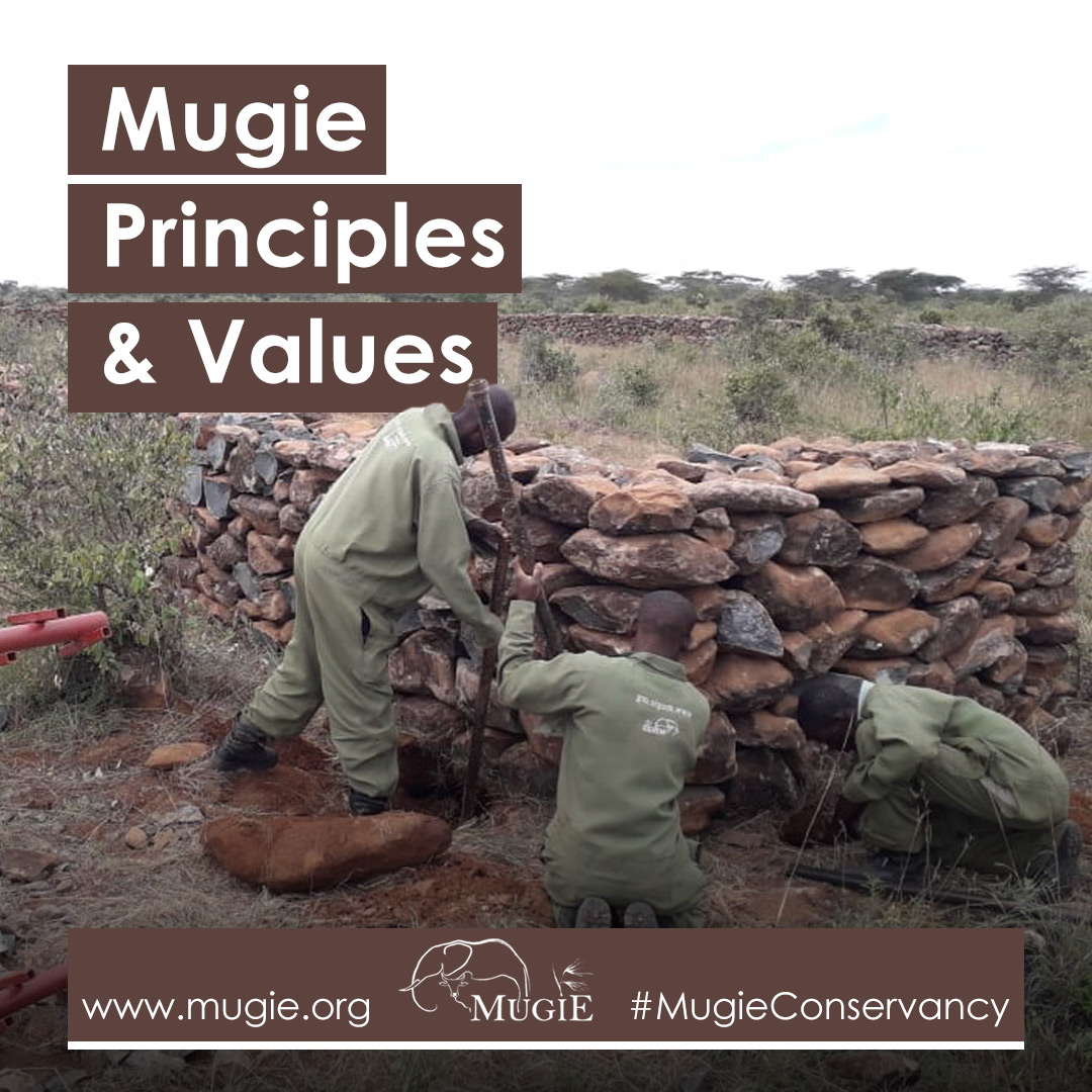 The #MugieConservancy is guided by a set of principles & values, http://www.mugie.org/profile/  #MugiePrinciples #sustainability #wildlifeconservancy #wildlifesanctuary #developmentalmilestones #leadershipdevelopment #ruraldevelopnent #partnership #regionaldevelopment #development #KOTpic.twitter.com/gQIsDHsxfo