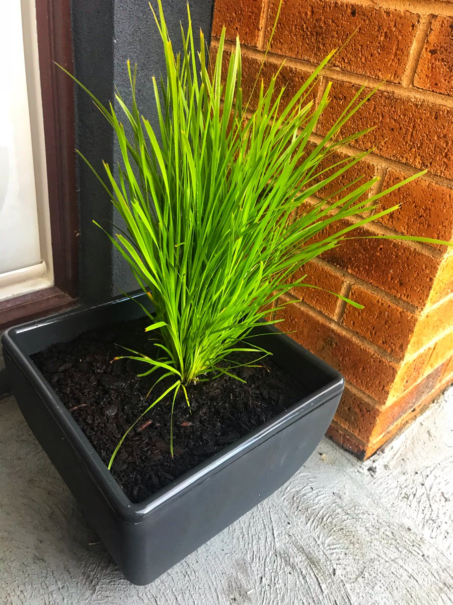 The @HomeLeisureAU Modern Square Planters are self-watering for healthier plants that are easier to look after. Proudly made in Australia.  Buy online: https://t.co/VFq07jH2Rx  #HomeLeisureAU #SelfWatering #GardenLife #gardening #potplant #AustralianMade #MumsWhoGarden