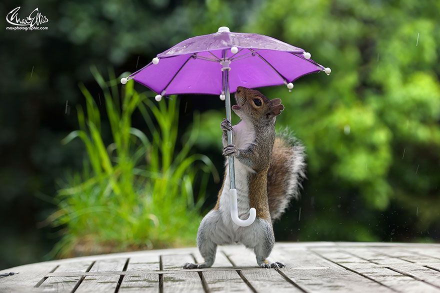 The human mind is like umbrella. It functions best when open. Max Gropius #writing max-ellis