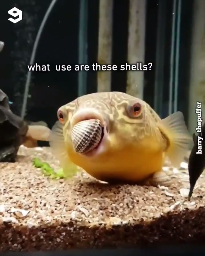me when I eat chips  📹barry_thepuffer | IG https://t.co/0cQDxmlxc0