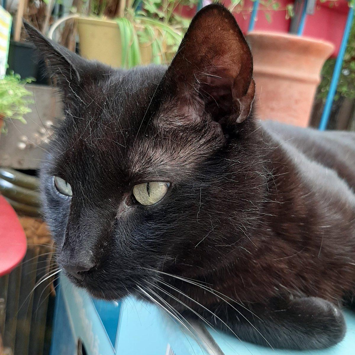 Der Kater freut sich aufs Wochenende. Er sieht es schon nahen. #katertag #catcontent #catstagram #catsofinstagram #ilovecats #catsruletheworld #blackcat #homeiswherethecatis #miau #meow #tgifpic.twitter.com/9i5xsCFsRt  by WalkingInTheClouds