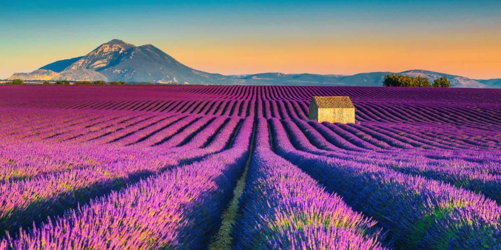 Just like for cherry blossom in Japan and tulips in the Netherlands, people from all over the world flock to the south of #France to lose themselves in the #lavender fields of #Provence 😍  Would you go on a trip specially to see flowers in bloom? 💐  #travel #travelling https://t.co/x46BHbK8id