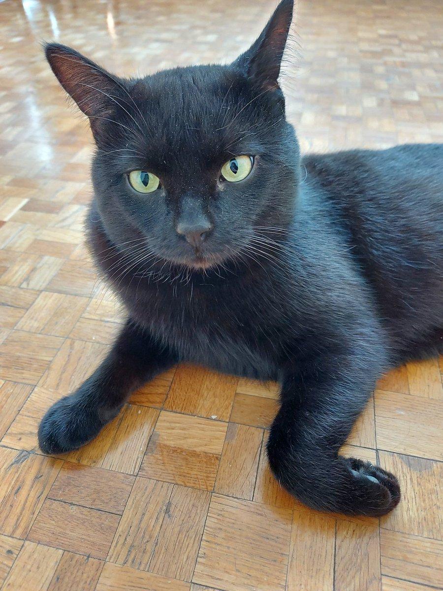 RT Manon_Bouquin: CHAT PERDU - Mon ami s'est perdu à #Paris20 depuis plus de 2 jours. C'est un grand chat mâle de 3 ans, castré, entièrement noir avec quelques poils blancs sur le poitrail. Yeux verts. Aidez-moi à le retrouver svp... https://t.co/xtO6UrjTmD #avocat #droit