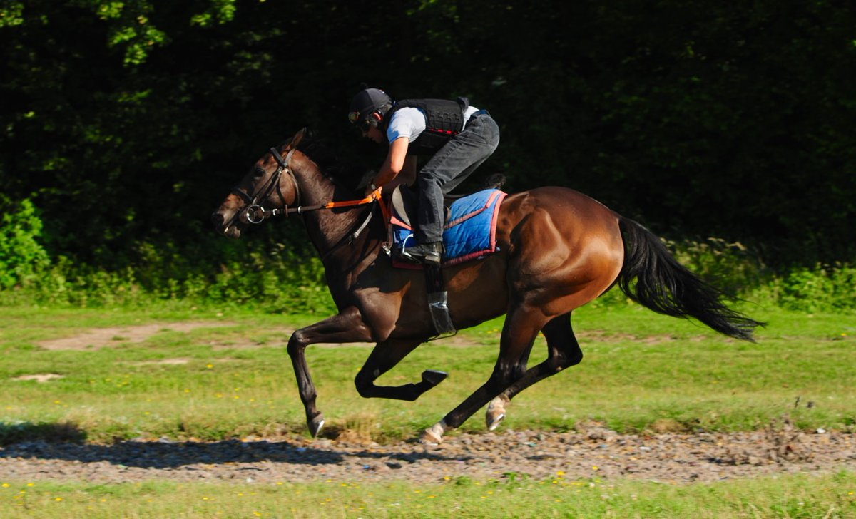 Mercenary Rose (Sepoy ex Hulcote Rose) lines up first of our 2 runners at Newmarket today in the Heed Your Hunch At Betway Handicap (1.10 pm). Jockey David Egan renews his winning partnership with her in this 5 furlong race. Pictured looking fit and well in her canter yesterday.