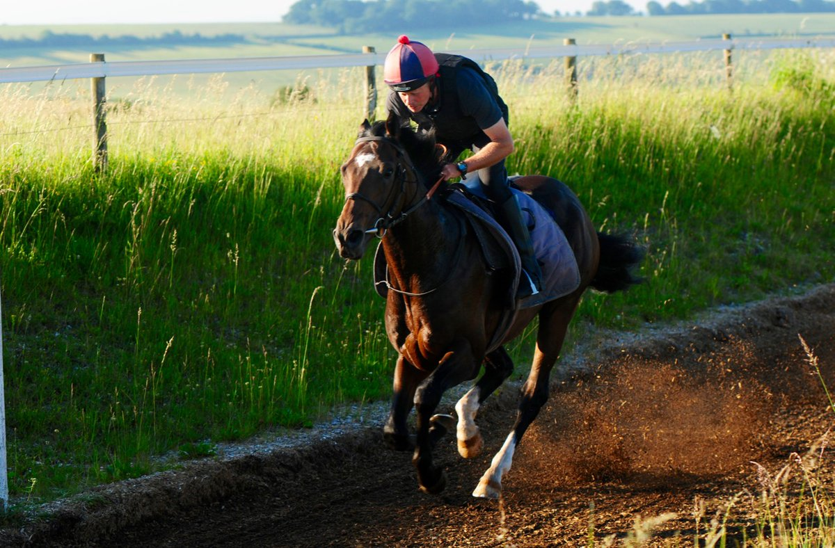 Atlantic Crossing (Mukharam ex Ghizlaan) runs in the 1 mile 4 furlong Newmarket Betway Handicap (4.20 pm) later on the Newmarket card. He's fit and enjoyed a pre-race canter yesterday morning (pictured). Ridden in the race today by David Egan.