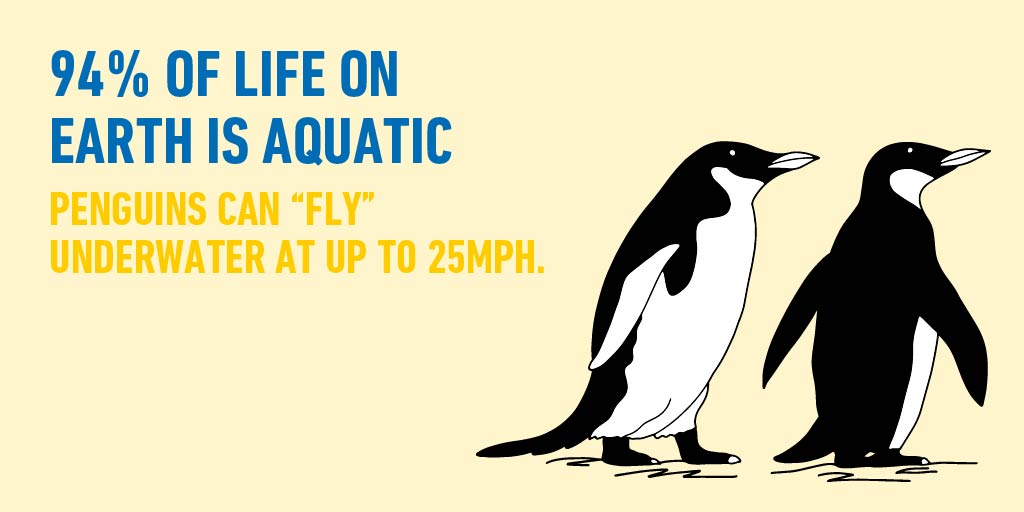 The popular bird may not be able to fly above the water, but that doesn't mean their wings are useless. Under the ocean's surface, penguins can swim up to 25mph. And given some penguins spend up to 75% of their lives in the water, those wings are put to good use. #WorldOceanMonth https://t.co/j3qjc9WLRy