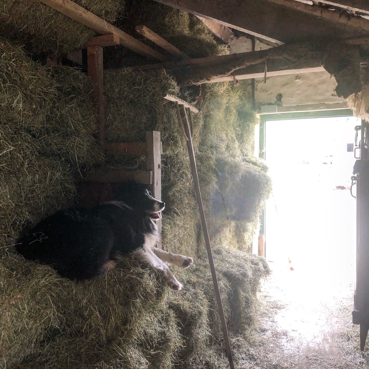 Stacked to the rafters. #hilfarm #hay #shepherdess @NFUCountrysidepic.twitter.com/XH3fggl6Uy