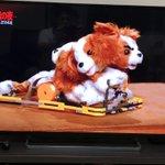 NHK「魔改造の夜」でトヨタの技術者がワンちゃんのおもちゃを早く走るように改造!顔が4つもある地獄のキメラになっていた!
