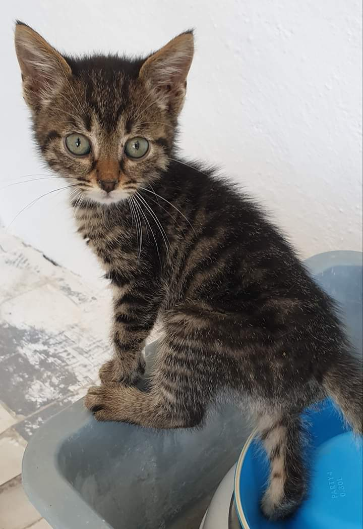 #Margo is still looking for a home!  She deserve a place to call her own and lots of love and attention. #AMOS #AMOSShelter #animalshelter #shelterkitten #lookingforahome #AdoptDontShoppic.twitter.com/yLtmCPJYfS
