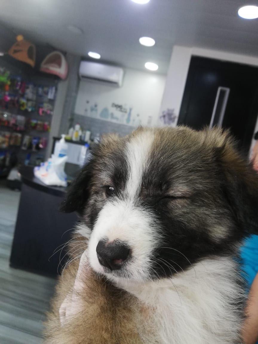 Say hi to baby Stark pic.twitter.com/I6IOEu7QCP  by إيمان الغير مؤمنة