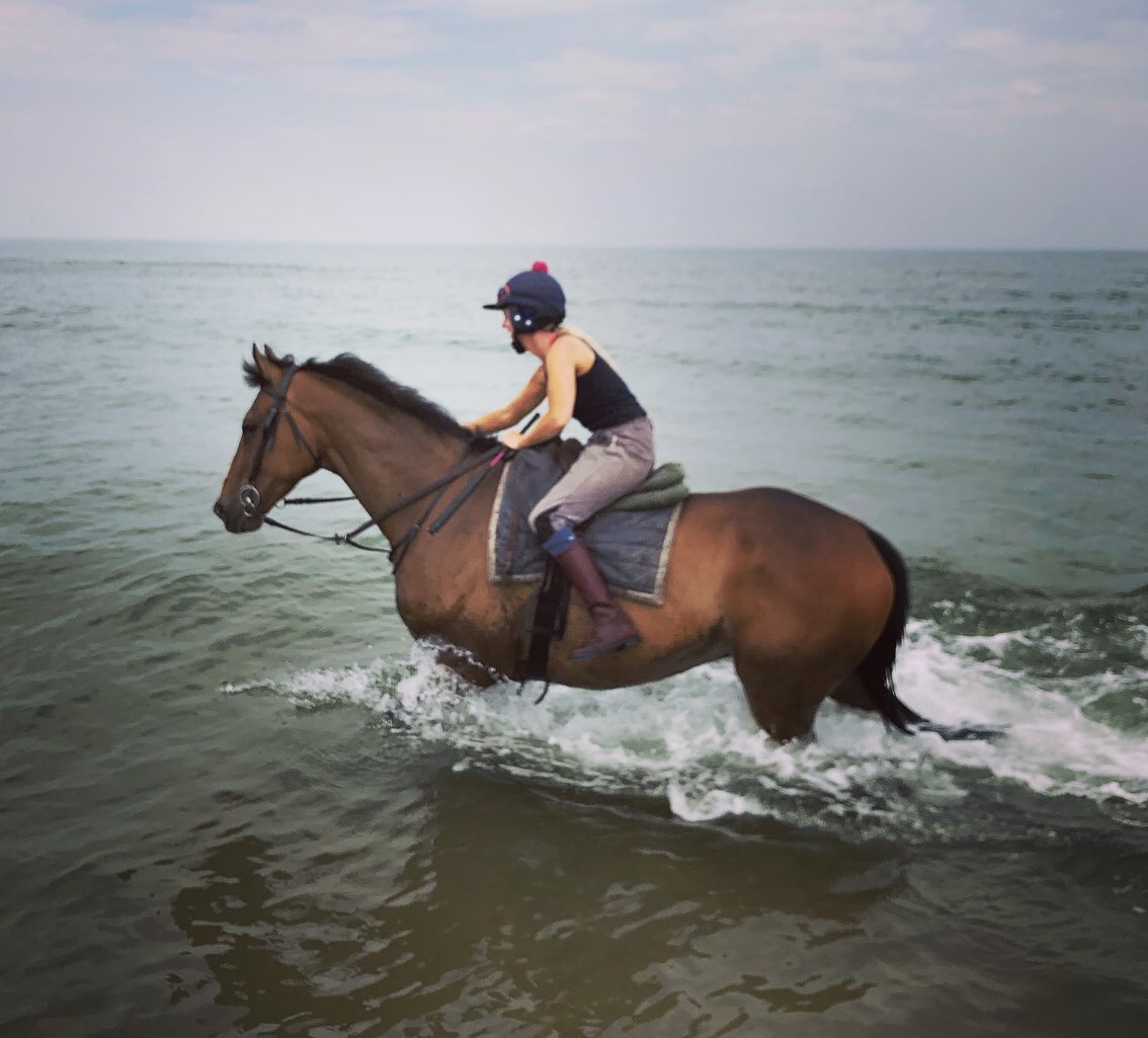 Ex-racer Call The Cops making the most of his well deserved retirement as my wife's very spoiled pet - worth his weight in gold for keeping her happy! @RoRlatest