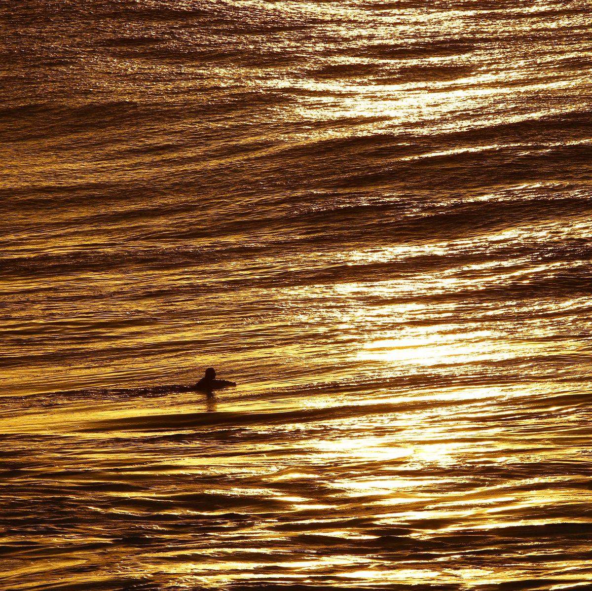 Paddling through liquid Gold... Nature is such a Beauty 🌊💛 https://t.co/LxOzjG8AnE