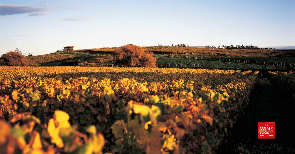 """""""It really was the trip of a lifetime"""" - our Buyer Freddy Bulmer explains how his expectations of New Zealand were blown away when experiencing the amazing quality of the different grape varieties on offer! https://t.co/tO9gmrEyfr https://t.co/hDWKeCEEOY"""
