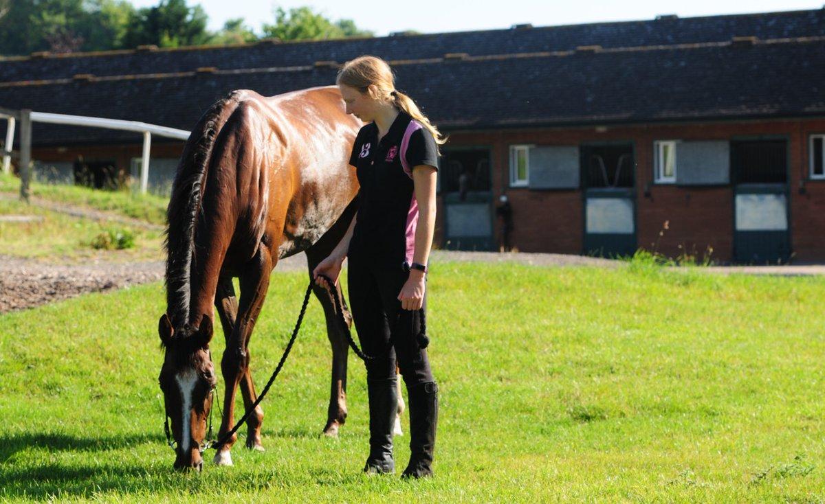 Dual winner Quemonda (Mount Nelson ex Quesada) enjoys a pick of grass after exercise with regular rider Amelia.